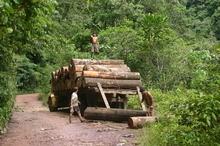 Aprueban dictamen de Ley Forestal a pesar de críticas