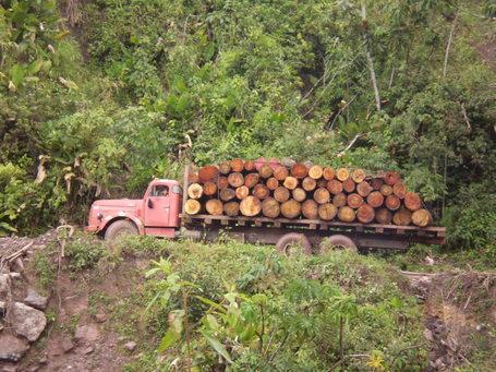 Deforestación en Pasco generó pérdidas de hasta US$1.750 mlls.